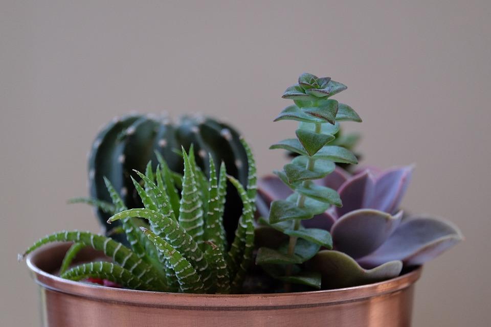 L'importanza di arredare con le piante